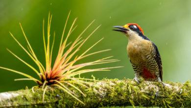 Photo of As melhores câmeras para fotografia de pássaros