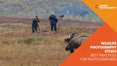 Photo of Ética na fotografia da vida selvagem: melhores práticas para fotógrafos