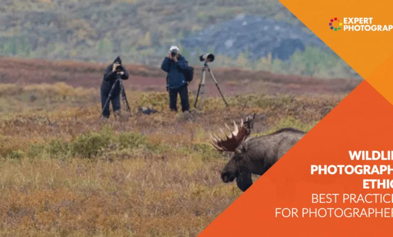 Ética na fotografia da vida selvagem: melhores práticas para fotógrafos