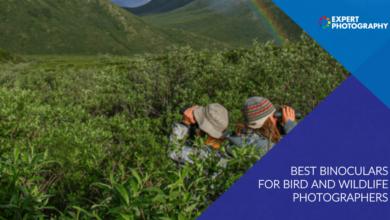 Photo of Os melhores binóculos para fotógrafos de aves e animais selvagens 2020