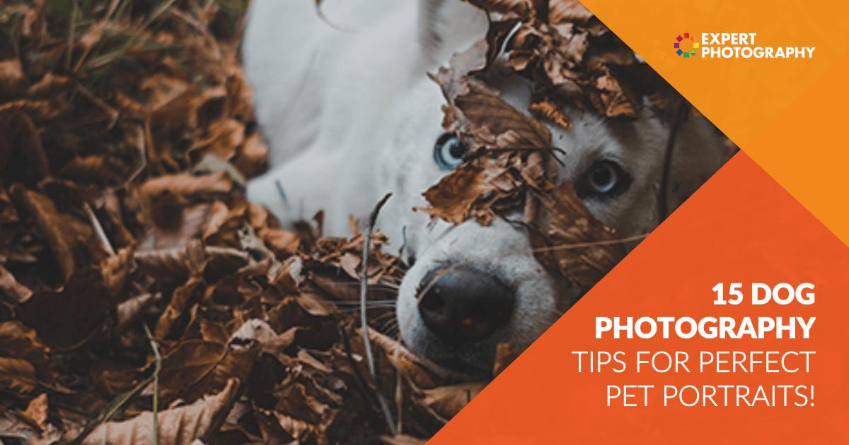 Photo of 15 melhores dicas de fotografia de cães (para retratos perfeitos de animais de estimação!)