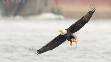 Photo of 10 dicas incríveis de fotografia de pássaros para iniciantes