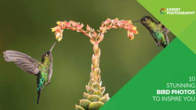 Photo of 10 fotos de pássaros deslumbrantes para inspirar você