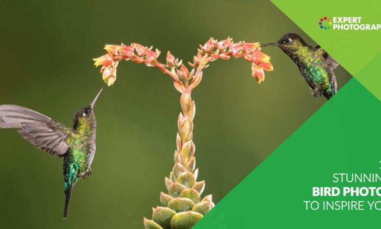 10 fotos de pássaros deslumbrantes para inspirar você