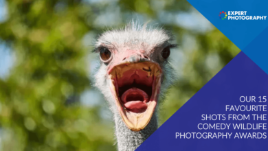Photo of 15 Melhores fotos do Prêmio de Fotografia de Vida Selvagem de Comédia de 2020
