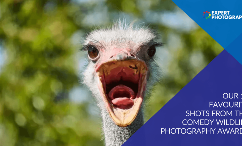 15 Melhores fotos do Prêmio de Fotografia de Vida Selvagem de Comédia de 2020