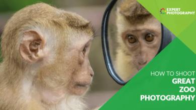 Photo of Como tirar ótimas fotos em um zoológico (9 melhores técnicas!)