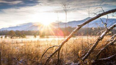 Photo of Dicas de fotografia de natureza e vida selvagem para iniciantes