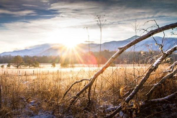 Dicas de fotografia de natureza e vida selvagem para iniciantes