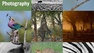Photo of 10 dicas para melhorar sua fotografia da vida selvagem
