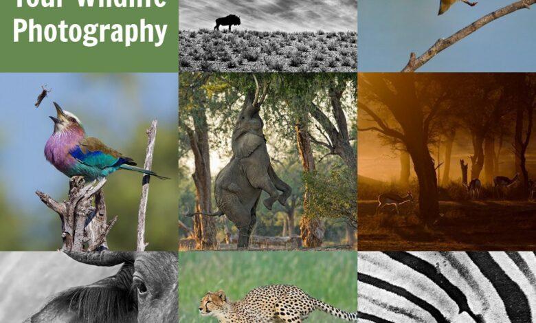 10 dicas para melhorar sua fotografia da vida selvagem