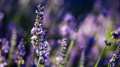 Photo of 10 ideias para fotografar a natureza em seu quintal