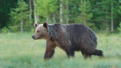Photo of 5 dicas para fotografar animais selvagens em condições de pouca luz