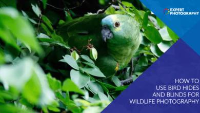 Photo of Como usar o esconderijo de pássaros e cortinas para fotografar animais selvagens