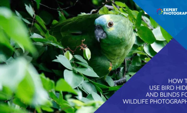 Como usar o esconderijo de pássaros e cortinas para fotografar animais selvagens
