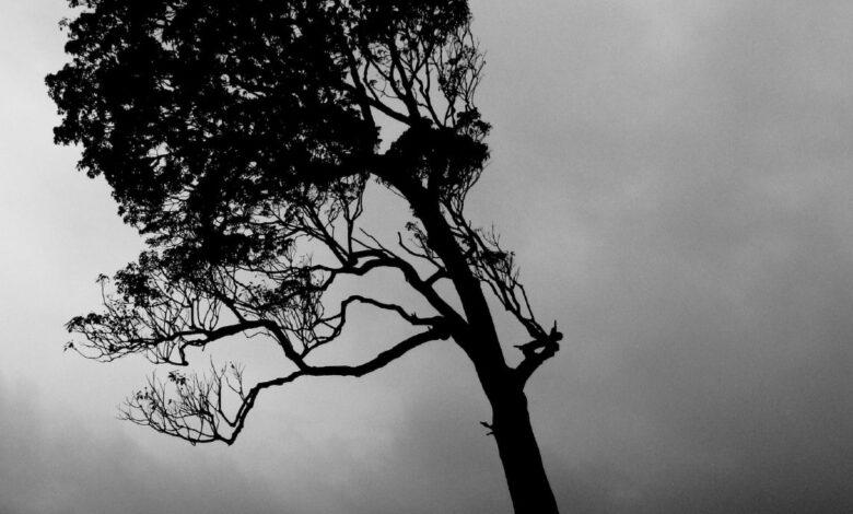 Desafio de fotografia semanal: escuro e temperamental