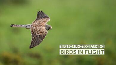 Photo of Dicas para fotografar pássaros em vôo