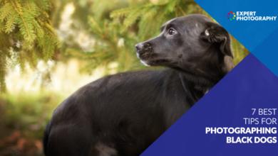 Photo of 10 dicas importantes para fotografar cães pretos (ou qualquer animal de estimação preto!)