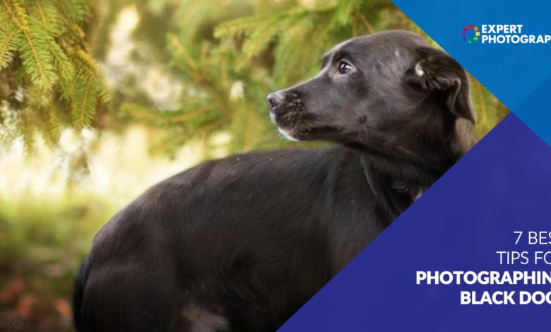 10 dicas importantes para fotografar cães pretos (ou qualquer animal de estimação preto!)