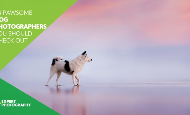 14 fotógrafos de cães incríveis que você deve ver em 2021
