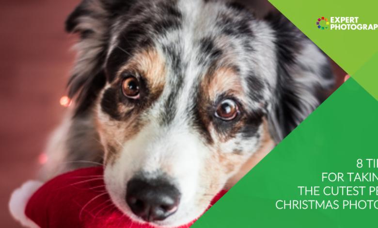 8 melhores dicas para tirar as fotos de natal mais fofas do animal de estimação