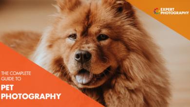 Photo of O melhor guia para fotografia de animais de estimação (87 melhores dicas!)
