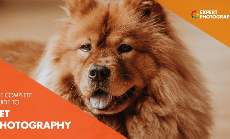 O melhor guia para fotografia de animais de estimação (87 melhores dicas!)