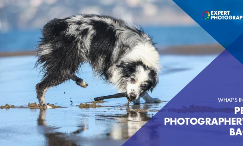 O que há na bolsa de um fotógrafo de animais de estimação? (Equipamento fotográfico para animais de estimação)