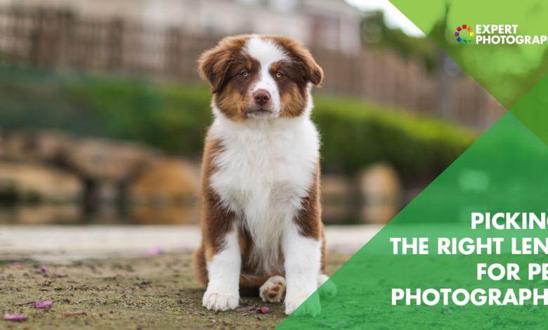 Qual é a melhor lente para fotografia de animais de estimação? (Guia de compras de 2021!)