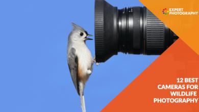 Photo of 12 melhores câmeras fotográficas de vida selvagem para comprar em 2021
