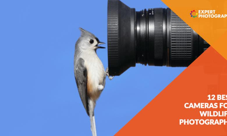 12 melhores câmeras fotográficas de vida selvagem para comprar em 2021