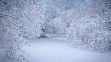 Photo of 13 dicas para fotografar neve: um guia para iniciantes
