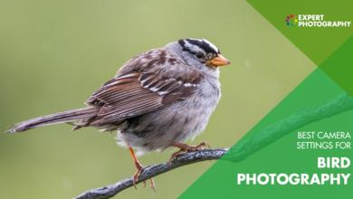 Photo of As melhores configurações de fotografia de pássaros para usar