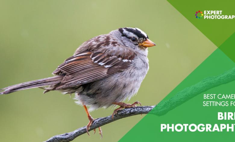 As melhores configurações de fotografia de pássaros para usar