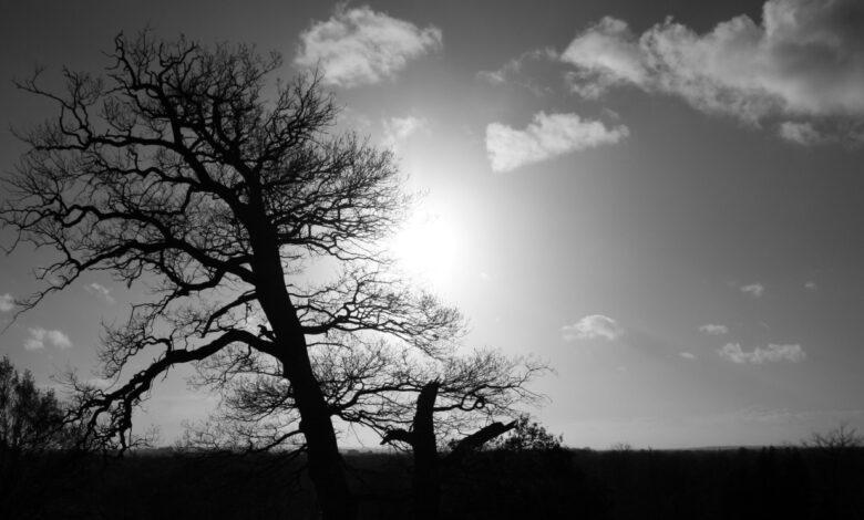 Desafio fotográfico semanal: árvores