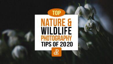 Photo of Principais dicas para fotografia dPS de natureza e vida selvagem em 2020