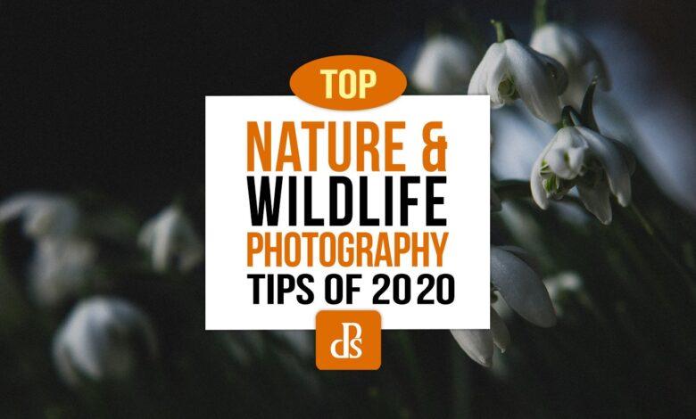 Principais dicas para fotografia dPS de natureza e vida selvagem em 2020