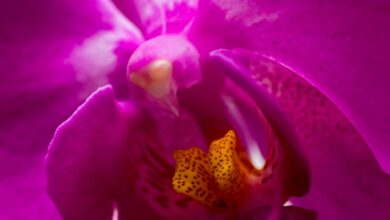 Photo of Desafio Fotográfico Semanal – Flores