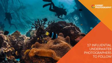 Photo of 17 fotógrafos subaquáticos influentes a seguir em 2021