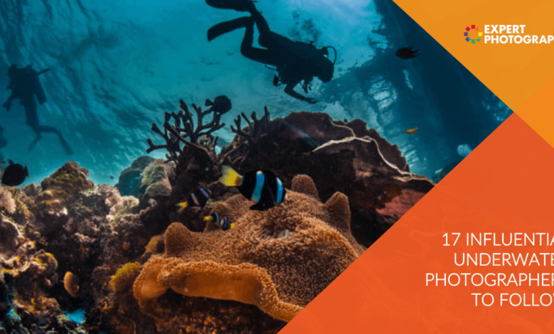 17 fotógrafos subaquáticos influentes a seguir em 2021
