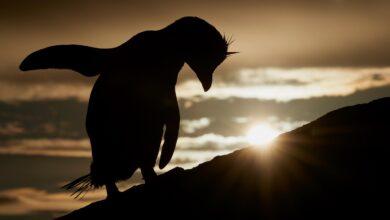 Photo of Veja os finalistas para o incrível fotógrafo de pássaros do ano de 2021