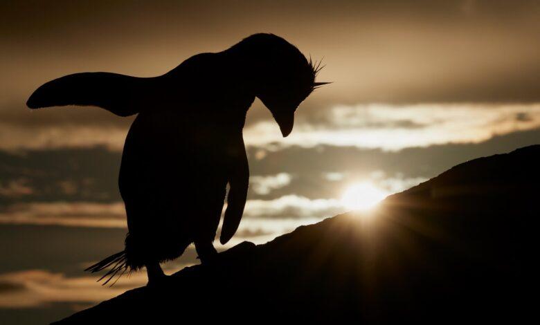 Veja os finalistas para o incrível fotógrafo de pássaros do ano de 2021