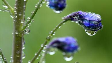 Photo of 10 dicas de fotografia de flores para ótimos resultados