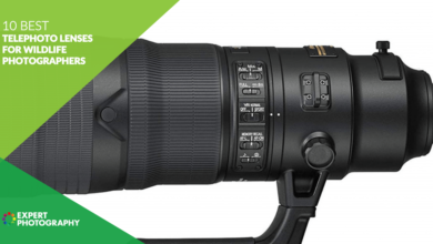 Photo of 10 melhores lentes telefoto para fotógrafos de vida selvagem em 2021