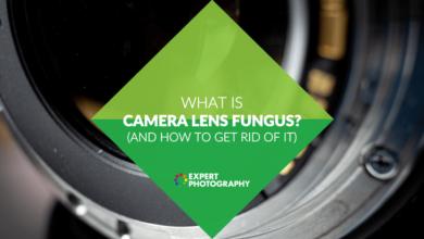 Photo of O que é fungo na lente da câmera? (E como se livrar disso!)