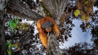 Photo of Veja os vencedores do Stunning Nature TTL Photographer of the Year