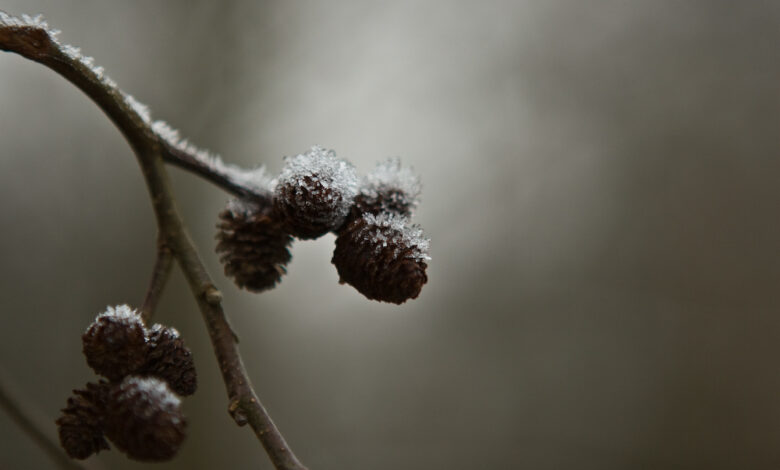 O Desafio de Fotografia Semanal - Frio